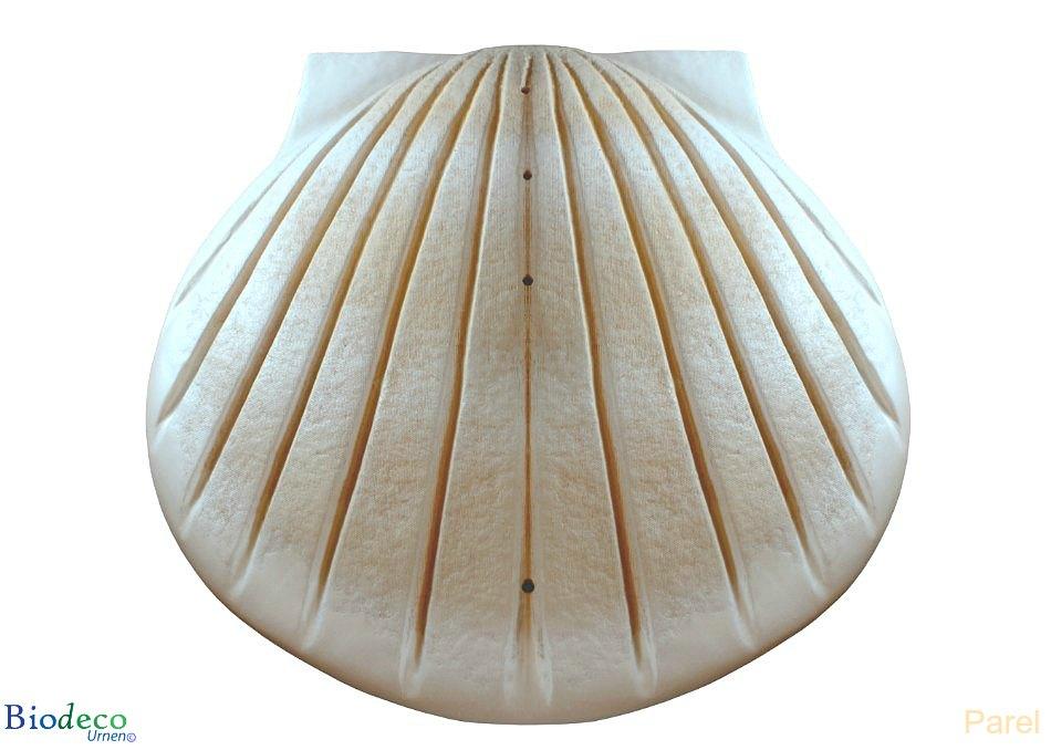 De biologisch afbreekbare zee-urn Schelp in de kleur parel, voor asbijzetting in het water.