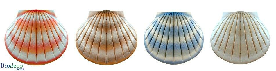 De biologisch afbreekbare zee-urn Schelp in vier verschillende kleuren: koraal, zand, aqua en parel