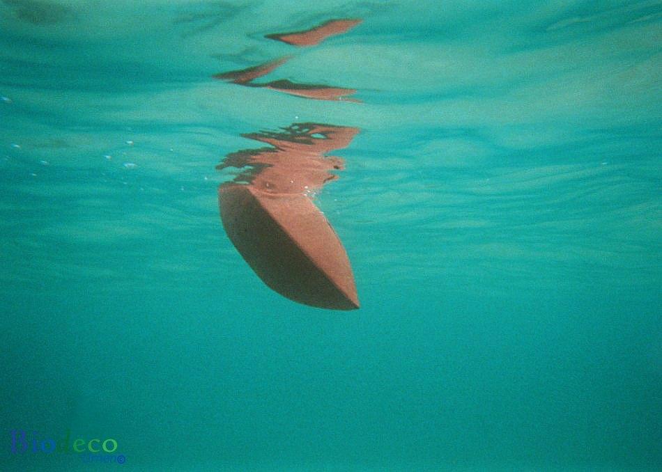 De biologisch afbreekbare zee-urn Memento, zinkend naar de bodem na de bijzetting